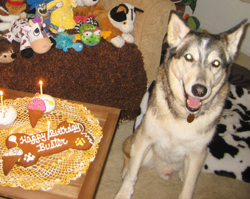 Buster's 13th B-day